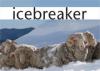Ca.icebreaker.com